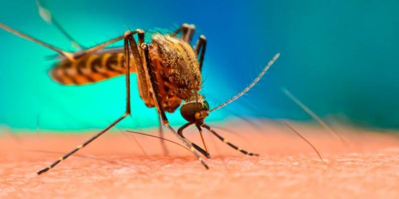 الملاريا ، الملاريا ، البعوض ، الأوبئة ، فيروس كورونا ، الصحة
