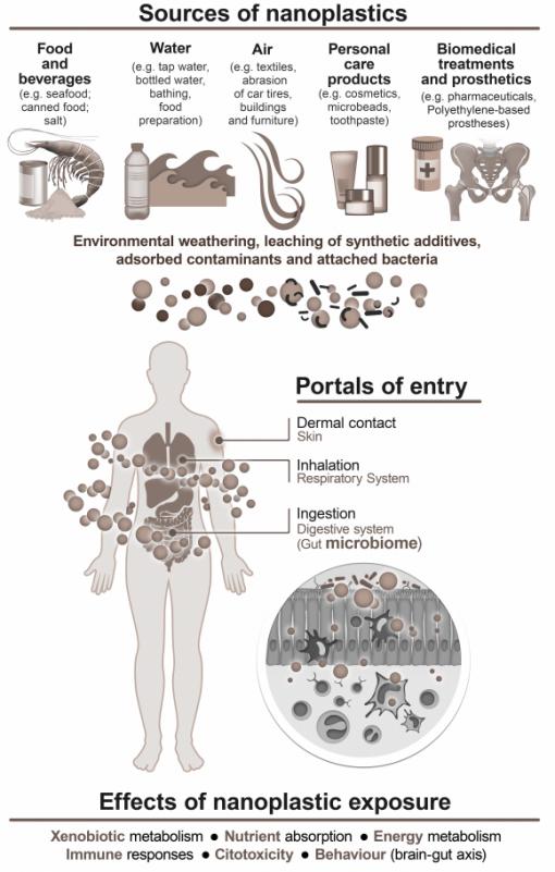 البلاستيك النانوي ، الأمعاء ، البلاستيك ، التلوث ، اللدائن الدقيقة ، الأسماك