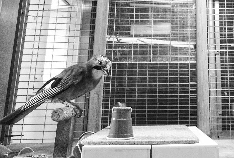 الطيور والحيل والسحر