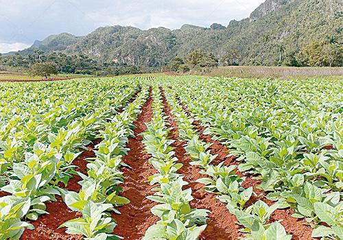 الأرض ، المحاصيل ، تغير المناخ ، الزراعة ، الأعمال التجارية الزراعية ، الاستثمارات