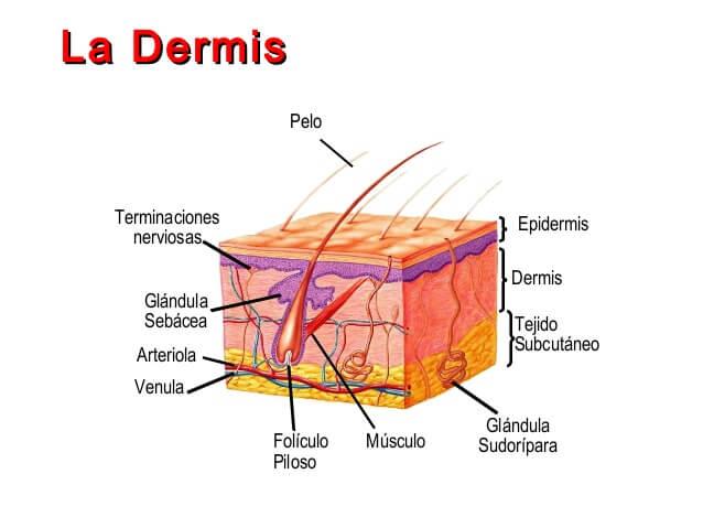البقع عبر الجلد مفيدة.