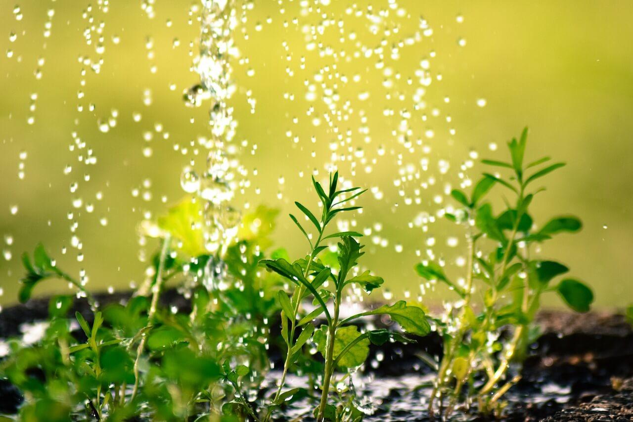 الماء في الصيف.