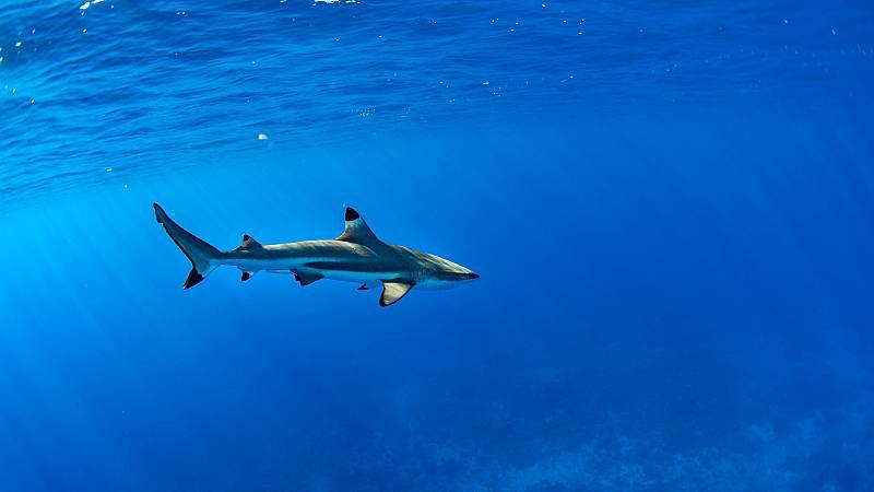 يستنكر الصندوق العالمي للطبيعة أن أكثر من نصف أنواع أسماك القرش والأشعة المتوسطية مهددة
