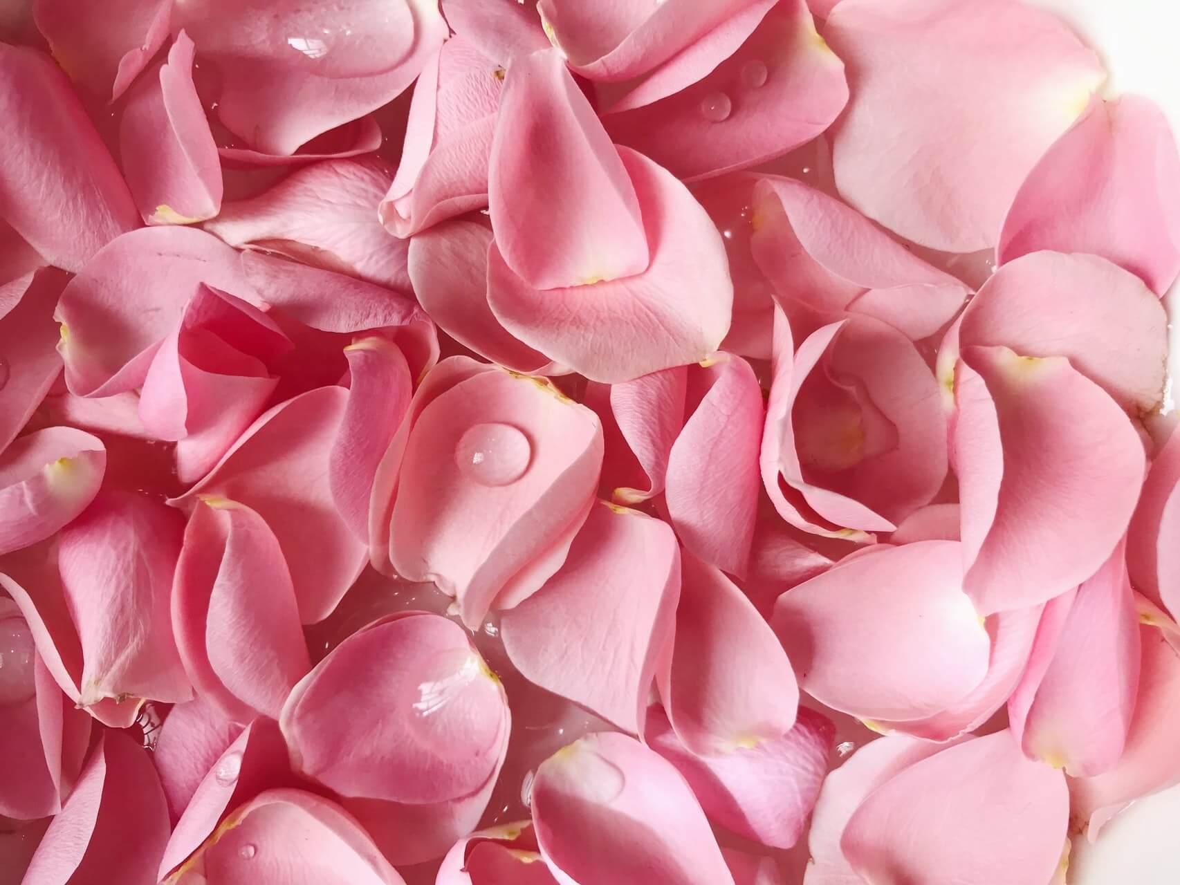 بتلات الورد
