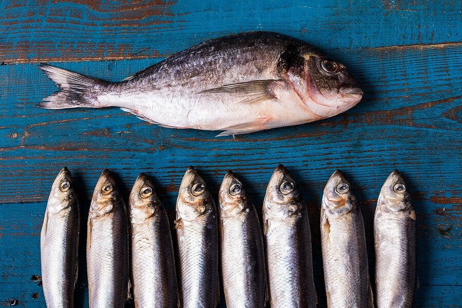 السمك الأزرق.