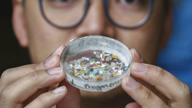 البلاستيك الدقيق ، البحار ، الحيوانات الأليفة ، البلاستيك ، السلسلة الغذائية ، الأسماك ، التلوث