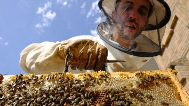 النحل ، المبيدات الحشرية ، العسل ، نيونيكوتينويدس ، باير ، مونسانتو ، الاتحاد الأوروبي