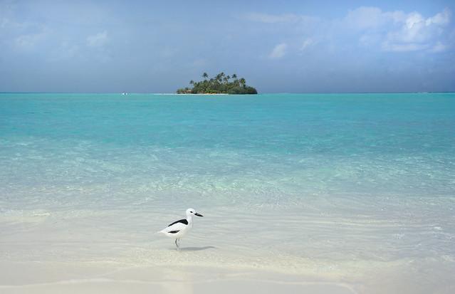 جولييت ، التميمة من Rihiveli Beach Resort ، جزيرة Mahaanaelhihuraa ، جزر المالديف